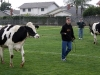 cow_chip_bingo_2-6-10-037