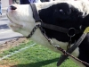 cow_chip_bingo_2-6-10-049